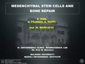 Stem cells for bone regeneration