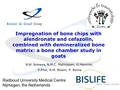 Impregnation of bone chips with alendronate and cefazolin, combined with demineralized bone matrix: A bone chamber study in goats