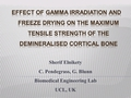 Effect of gamma radiation and freeze drying on the maximum tensile strength of the demineralised cortical bone