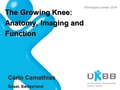 The Growing Knee: Anatomy, Imaging And Function